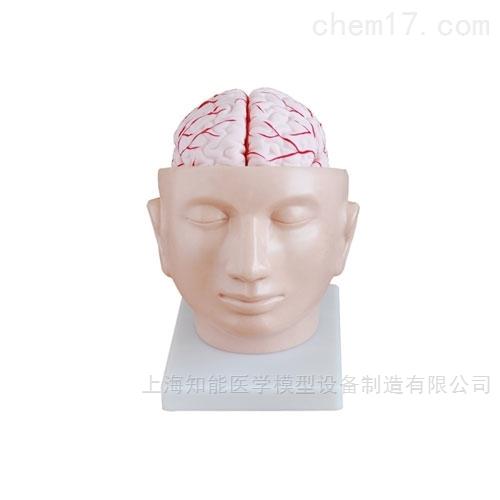 知能医学模型大脑皮质分区模型
