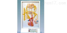 心的神经支配电动模型