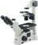 AE30/31倒置顯微鏡AE30/31