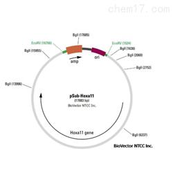 JRD848细胞端粒酶活性检测服务