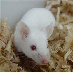 大鼠特殊尾静脉给药实验服务