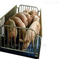 DCS-XC-XM畜牧电子秤,称猪磅秤