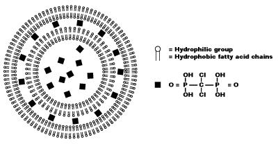 機制氯膦酸鹽脂質體