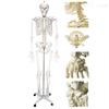 KAH/A11101/1男性人体骨骼模型 人体各大器官